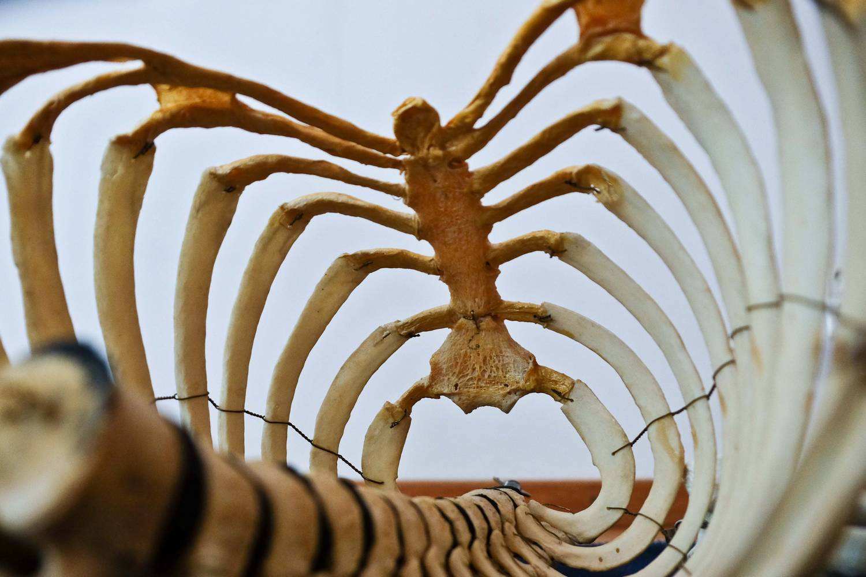 Training in osteopathy
